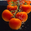 Stock Photo: Fresh tomatoes in liquid