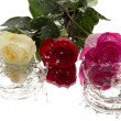Three roses, reflection and drops — Stock Photo