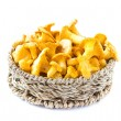 Stock Photo: Fresh, raw chanterelles in basket, great harvest