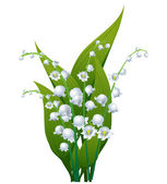 Lily of the valley — Stok Vektör