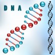 Dna strand — Stock vektor