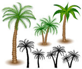 Palm tree set — Stock Vector