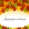 Vettoriale Stock : Autumn leaves text frame