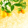 Oranges on a solar background — Stock Photo