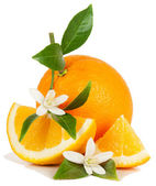 Naranja y flor — Foto de Stock