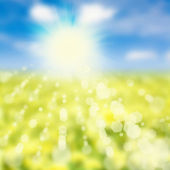 Sky and yellow meadow — Stock Photo