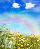 Rain over a yellow meadow — Stock Photo