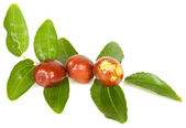 Jujube — Stock Photo