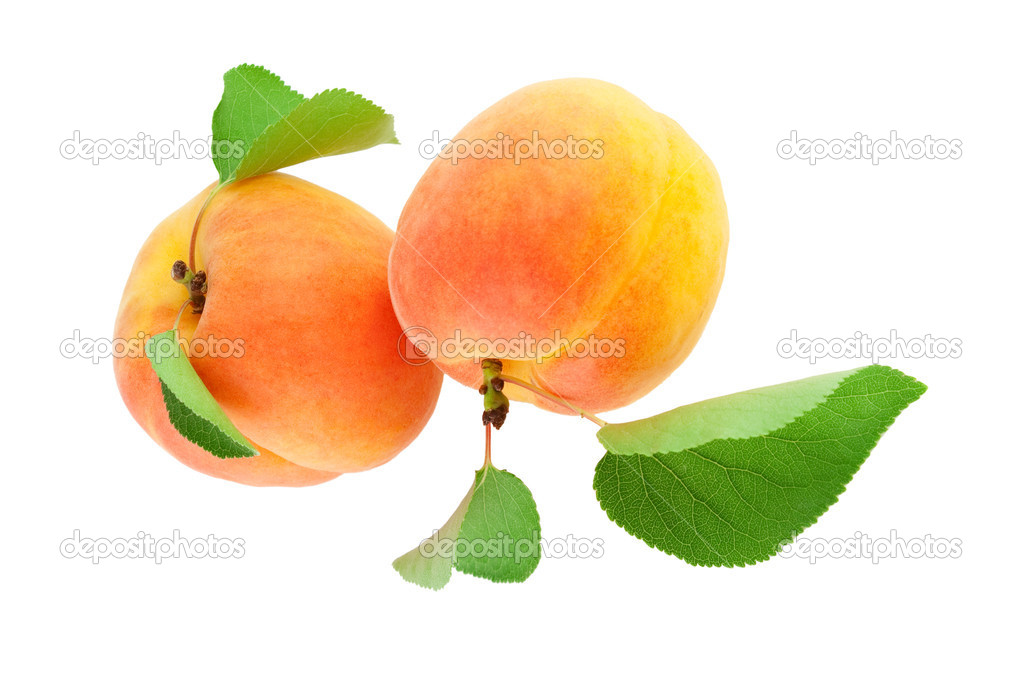 Apricot whole both with leaves  .Isolated on white background — Stock Photo #18316237