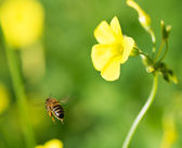 Flower and bee — Foto de Stock