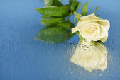 Rose on a mirror — Stock Photo