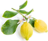 Lemon  with flowers and leaves — Stock Photo