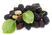 Vruchten van de zwarte moerbei (morus nigra l.). — Foto de Stock