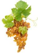 Golden raisins and leaves of grape — Stock Photo