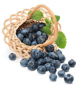 fresh blueberries with leaf in a basket is scattered — Stock Photo