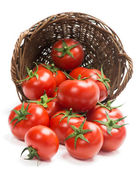 Tomatoes  in a basket is scattered — Stock Photo