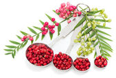 Pink Peppercorns, fresh and dry — Stock Photo