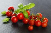 バジルとトマト — ストック写真