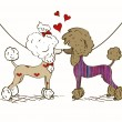 Stock Vector: Illustration of two lovers Poodle dogs