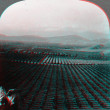 Stock Photo: Navel Orange Grove 3D anaglyph