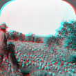 Stock Photo: Shepherd looking over sheep Montan3D anaglyph