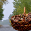 Basket with mushrooms — Stock Photo #19346623
