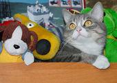 Kedi yumuşak oyuncaklar arasında oturur — Stok fotoğraf