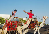 Gesture, sign, symbol, fuck, middle, finger. Egypt. 2 young men on camels in the streets. — Foto Stock