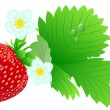 Stock Vector: Strawberry composition.