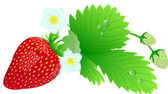 Strawberry composition. — Wektor stockowy