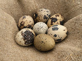 Quail eggs. — Stockfoto