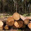 Stock Photo: Tree felling