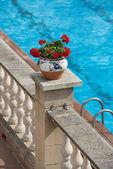 Red pelargonium flower in flowerpot on bright blue water backgro — Stock Photo