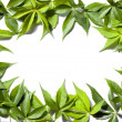 Frame of green leaves — Stockfoto