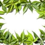 Frame of green leaves — Stock Photo #15757159