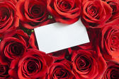 Blank white gift card on a red rose Valentine — Stock Photo