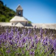 Stock Photo: Abbaye de Sénanque with lavender field, Provence, France
