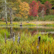 Stok fotoğraf: Colors of Fall in Maine