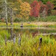 Stockfoto: Colors of Fall in Maine
