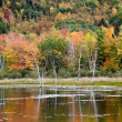 Stock Photo: Vivid colors of Fall