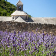 Lavenders with Abbaye de Sénanque in background, Provence, France — Stock Photo