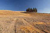 Group of cypreses near San Quirico d Orcia, Tuscany, Italy — Stock Photo