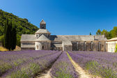 Abbaye de Sénanque with lavender field, Provence, France — Foto de Stock