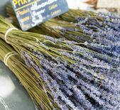 Bouquet of dried Lavandin, Fontaine-de-Vaucluse, Provence, France — Stock Photo