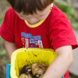 Boy holds a toy bucket with new potatoes — Photo