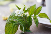 Raspberry flower on the table — Stock Photo