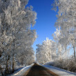 Stock Photo: Road into winter