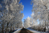 Road into winter — Stock Photo