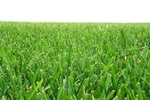 Cut grass — Stock Photo