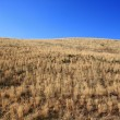 Yellow steppe — Stock Photo